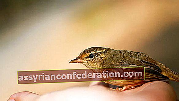 Apa artinya melihat burung dalam mimpi? Ungkapan menangkap burung dalam mimpi