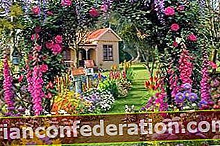10 Bunga Musim Panas untuk Taman dan Balkon!