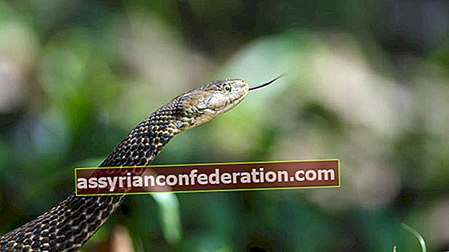Apa arti gigitan ular dalam mimpi? Gigitan ular dalam mimpi