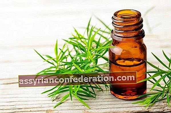 Cosa fa l'olio dell'albero del tè? Quali sono i vantaggi?