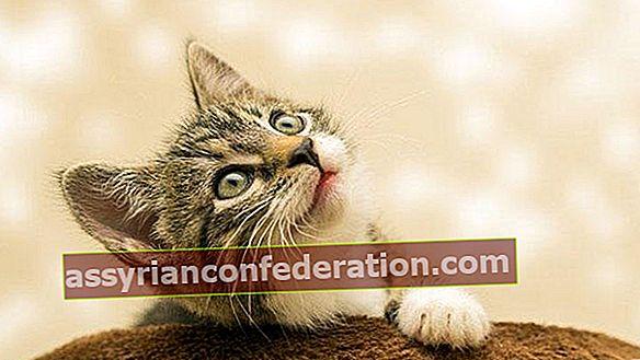 Apa artinya melihat kucing dalam mimpi? Ekspresi melihat anak kucing dalam mimpi