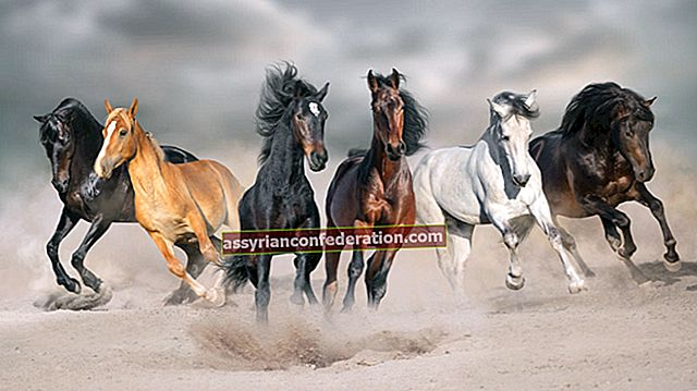 Apa artinya menunggang kuda dalam mimpi?